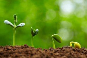 ปลูกต้นไม้ เพาะเมล็ด ปลูกต้นกล้า ทำเกษตร