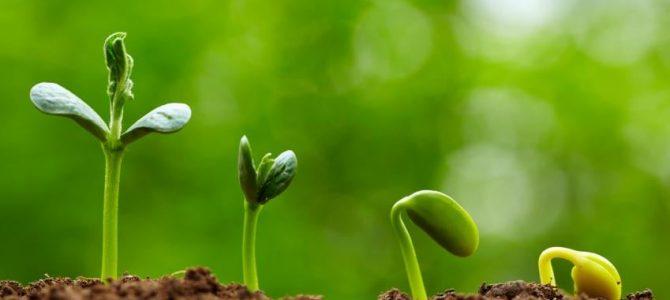 วิธีปลูกต้นไม้ เพาะเมล็ด เพาะต้นกล้า